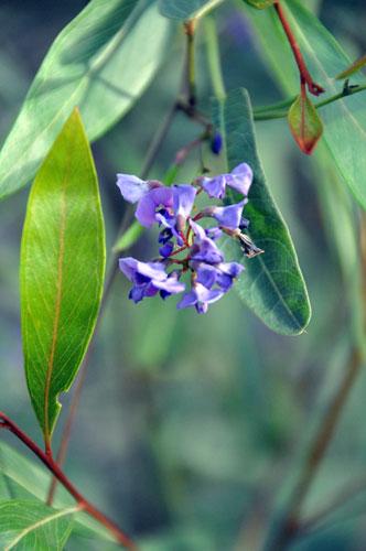 Australian Native Flowers - Zenscape Gardens