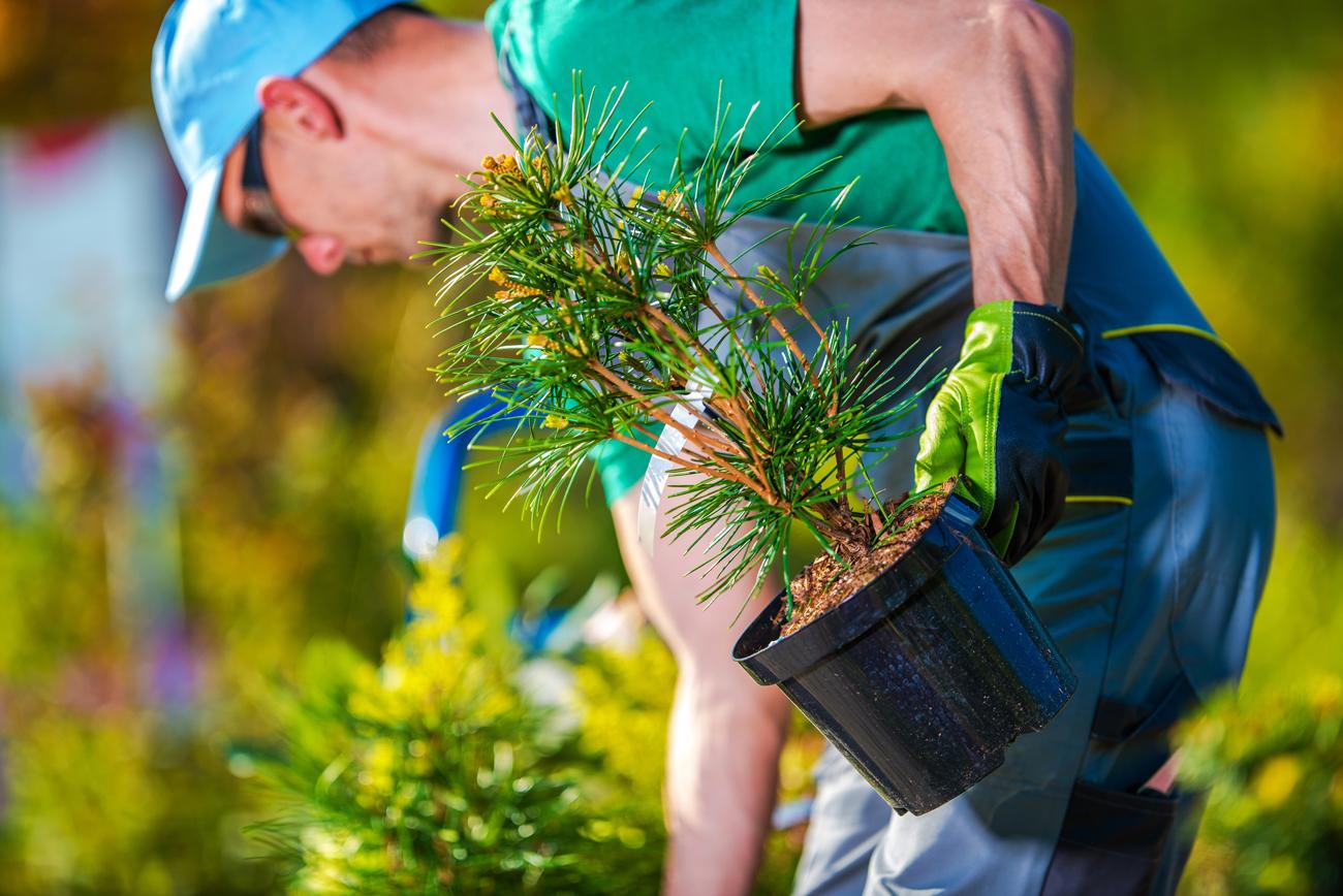 Zenscape Gardens - Professional Landscape Gardeners, Kenmore, Brisbane