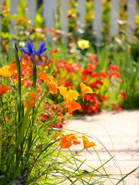 Spring Flower Garden - Zenscape Gardens, Brisbane, Qld