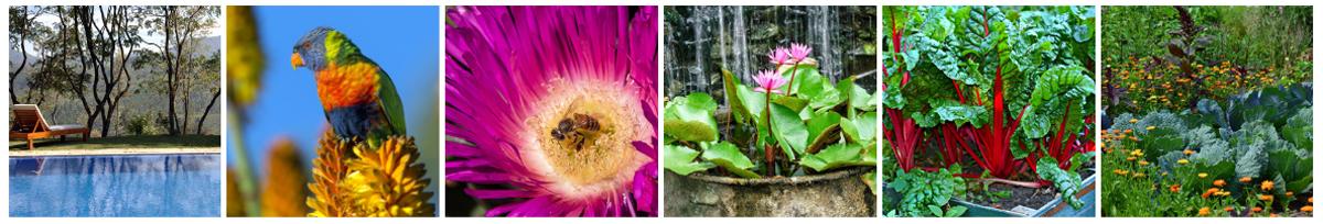 Garden Design and Renovations | Zenscape Gardens , Kenmore, Brisbane
